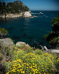 Point Lobos - Cove with Flowers smaller (deanwampler) Tags: pointlobos