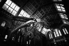 Blue whale skeleton (lja_photo) Tags: londonsnaturalhistory nhm london londoncity bluewahleskeleton wahle skeleton architecture architectural art abstract animal white europe exploration england travel tourism textures indoor illuminated photography streetphotography dramatic detail fineart fujixt20 history light contrast city view black blackandwhite bw bnw blackandwhitephoto natural nature noperson monochrome monotone monoart moody museum