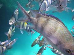 IMGP0061 (Christine Gerhardt) Tags: redsea rotesmeer underwaterphotography unterwasserfotografie ägypten egypt