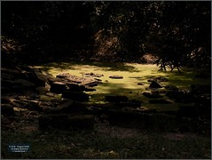 Angkor, Preah Khan Pond 20180203_134308 DSCN2742 (CanadaGood) Tags: asia seasia asean cambodia siemreap angkor khmer preahkhan temple tree pond archaeology canadagood 2018 thisdecade color colour