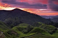 TWB_7572 (xxtreme942) Tags: malaysia cameronhighland sunrise bluehour sun cloud sky teaplantation hill nature dawn outdoor