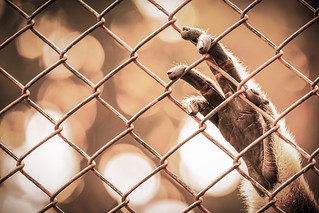 Abstract of imprison from monkey's hand hanging on cage