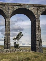 Ribblehead Viaduct (robmcrorie) Tags: ribblehead viaduct iphone 7 plus tree moor fell train rail railway settle carlisle yorkshire enthusiast railfan