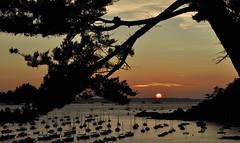 L'heure de se coucher (DeniseJC) Tags: sunset coucherdesoleil tree boats beach stbriac stbriacsurmer brittany bretagne breizh