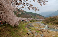 3Road1023_0412-ps (revinhart) Tags: southkorea spring hadong road1023
