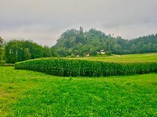 Rainy and misty morning near lake Hechtsee in Tyrol, Austria
