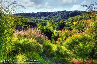 Country Garden Landscape by Kaye Menner