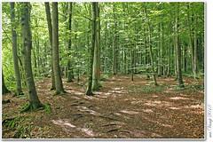 Der Albtrauf (Mr.Vamp) Tags: deralbtrauf schwäbischealb alb landschaft wald mrvamp vamp canon eos70d natur wanderung erlebnis thealbtrauf swabianalb landscape forest nature hike adventure