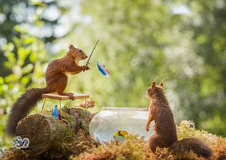 red squirrels with a fish in a fishing bowl