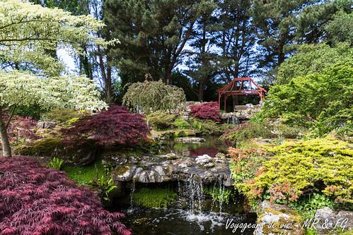 "La relaxation du jardin Japonais • <a style=""font-size:0.8em;"" href=""http://www.flickr.com/photos/151667760@N04/41178050620/"" target=""_blank"">View on Flickr</a>"
