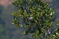 IMG_4762 (edward_rooks) Tags: sierraazulopenspacepreserve bald mountain mount umunhum insects wildflowers butterflies bees wasps assassin bug