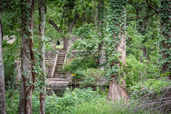 Stairs Saturday (Jims_photos) Tags: wimberleytexas texas trees outdoor outside adobelightroom adobephotoshop shadows daytime jimallen jimsphotos jimsphotoswimberleytexas lightroom landscape nopeople nikond750