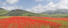 Castelluccio di Norcia fioritura luglio 2018 (thanks for your visit) (Flavio Ciarafoni) Tags: castelluccio di norcia umbria fioritura papaveri flaviociarafoni flavio ciarafoni naturefrother getoutside travelmore landscapelover paisaje paysage landscapecaptures landscapephotography pixelig landscapehunter foliage landscapelovers landscapestylesgf landscapespecialist landscapeporn autumn autunno getlost travelingtheworld sunset sunrise water eau discoverearth exploretheglobe nakedplanet placeswow earthfocus ourplanetdaily earthofficial morning nature night photooftheday sunsetlovee sunsetpics sunsethunter landscape sunsetlovers omd em1 em10 zuiko 1240 panasonic 20mm f17