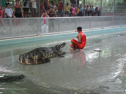 В пащу крокодилу Паттайя Таїланд Thailand InterNetri 17