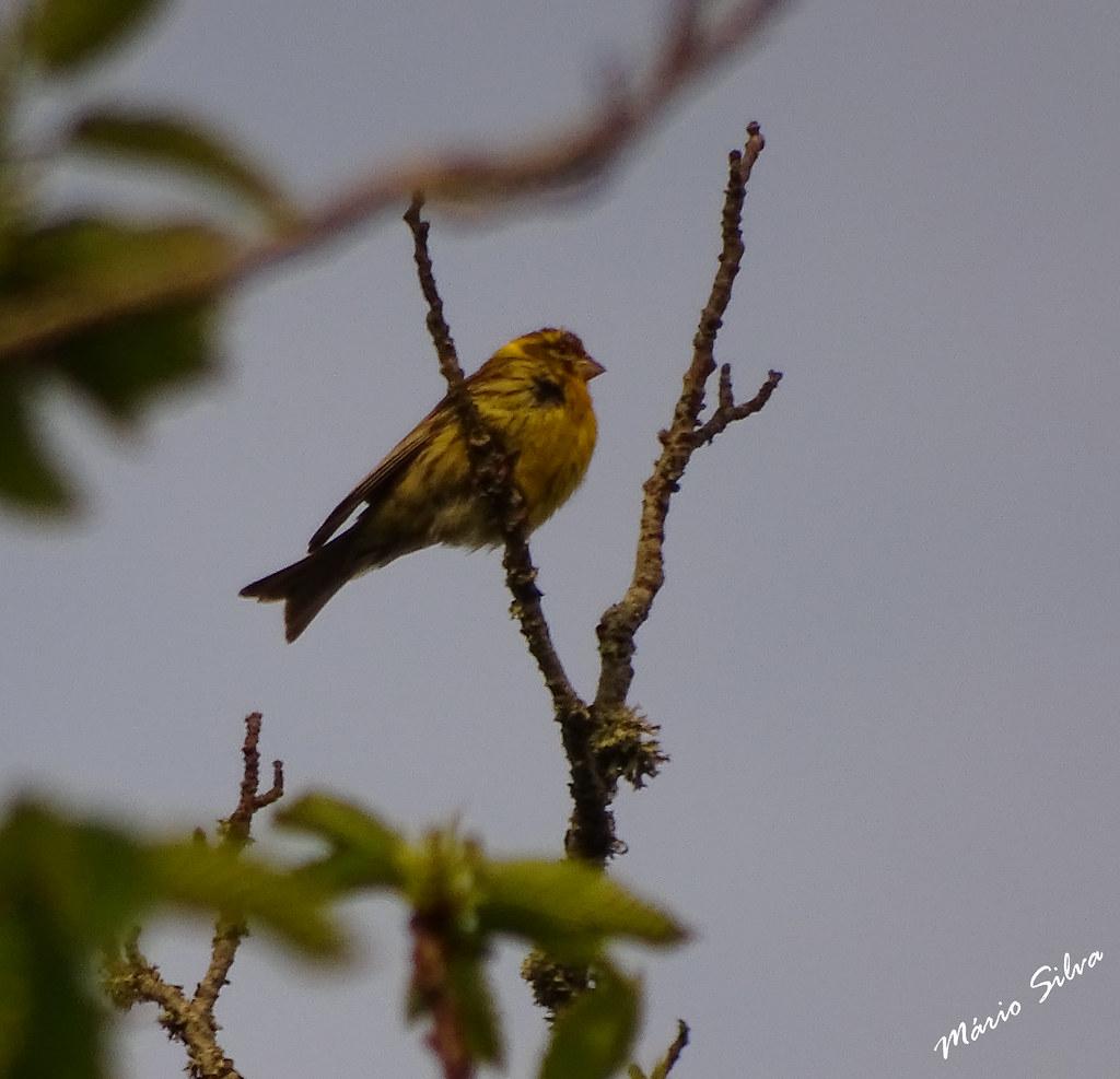 Águas Frias (Chaves) - ... ave descansando em ramos de árvore, desfrutando da paisagem ...