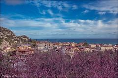 Roccella Jonica tra i fiori di pesco (Francesca D'Agostino) Tags: mare sea cieloblu bluesky fioridipesco peachflowers roccellajonica calabria