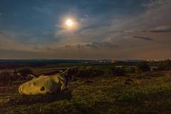 clair de lune et mars après l'éclipse_ after eclipse 27 juillet 2018 (heiserge) Tags: mars france mammiferes landscape ciel vache europe lorraine lune moon moselle villersstoncourt paysages cow animal animaux eclipse