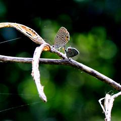 流光溢彩 6 (廖醫師個人影集) Tags: insect light greencolor butterfly