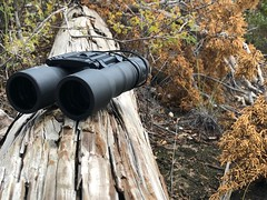 Look! Fall is coming (joncutrer) Tags: jcutrer royaltyfree hiking creativecommons brown fall leafs foliage wood outdoors look binoculars