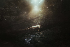 Girl from the woods (brach26c) Tags: fineart forest art arte artefino abandoned wood woman light luz luznatural natural naturalight carlosbrachophotography carlosbracho conceptual concept concepto surreal bosque