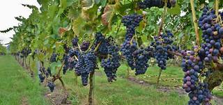 Wijngoed Havelte