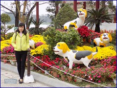 Vietnam, Hue Year of Dog 20180213_120330 DSCN3218 (CanadaGood) Tags: asia asean seasia vietnam vietnamese hue flowers dog statue tree river people person canadagood 2018 thisdecade color colour fashion