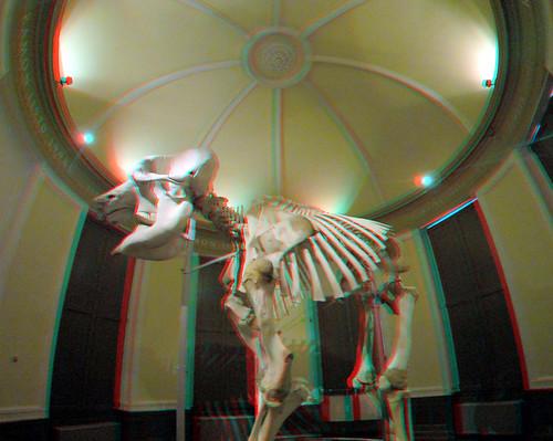 Skeleton Ramon NHM Rotterdam 3D GoPro