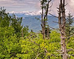 Cloudy Mountain (augphoto) Tags: augphotoimagery green nature outdoors scenic tress brysoncity northcarolina unitedstates