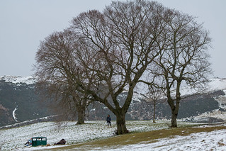 Trees in Edinburgh, Scotland