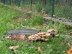 DSCN9585 (Gianluigi Roda / Photographer) Tags: autumn october 2012 apennines autumncolors mushrooms appenninobolognese autunno alberi funghi