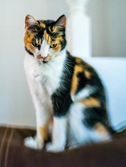 Little Feline (Manuela Durson) Tags: lensbaby sol 45 artistic blur blurred selectivefocus cat pet pets feline texture textured