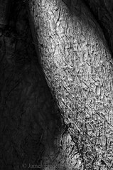 Hidden (James Etchells) Tags: macro infrared ir black white monochrome photography portrait shape structure surface texture nature natural world tree bark patterns pattern nikon sigma experiment