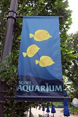 reminder of home (BarryFackler) Tags: scottaquarium suzanneandwalterscottaquarium henrydoorlyzoo henrydoorlyzooandaquarium aquarium publicaquarium banner outdoor yellowtangs fish zebrasomaflavescens zflavescens lauipala trees umbrellas sealife seacreatures animals fauna marinelife marinebiology biology zoology barryfackler barronfackler omaha omahanebraska omahazoo midwest omahane nebraska 2018 vacation sign