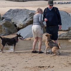 057-P1030842 LR (1gl) Tags: 2018 carpet carpets killer gumbo norfolk wintertononsea beach dogs coast