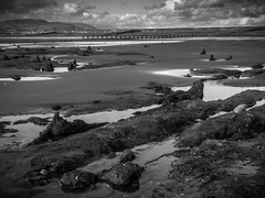 Prehistoric submerged forest (G. Warrink) Tags: wales visitwales cymru findyourepic lovewales beautifulwales discoverwales prehistoric remains forest trunks bronzeage 5500yearsold borth ynyslas sea shore coast sand beach blackwhite blackandwhite