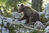_W1G8996 (Outlander Photo) Tags: kozarišče cerknica slovenia si
