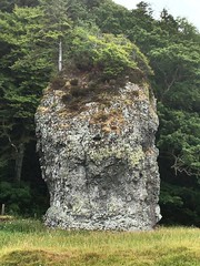 Stand alone giant stone at Oban. (Bennydorm) Tags: ganavan vegetation trees iphone6s luglio julio juillet july europe gb uk lascozia escocia ecosse schottland scotland oban big huge monolith boulder stone