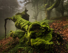 BOSQUE ENCANTADO (WilsonAxpe) Tags: verde green enchanted wood enchantedforest bosqueencantado paisvasco euskadi