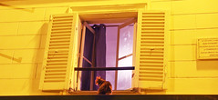 Paris (kirstiecat) Tags: cat caturday jeantoussaint kitty yellow purple color night paris europe france worldcup feline chat gato chatte canon streetcat