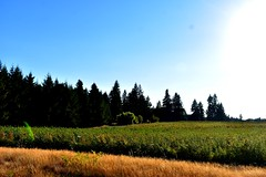 sunset soon (wolf8_us) Tags: travels washingtonstate country olympia tumwater sunsets farms