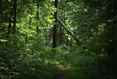 Czarny Staw 12.08.2018 (Kosmi88) Tags: nikon poland polska las forest fauna flora trawa drzewa droga road summer lato chill pond water staw d5300 reflection