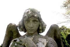 The Monteverde Angel Copy in Green-Wood Cemetery 7708A (Brechtbug) Tags: grieving angel white marble covered lichen greenwood cemetery statue wings cemeteries graveyard tomb brooklyn 2018 nyc new york city 08122018 weeping 2004 sooty thinking nearer that civic virtue