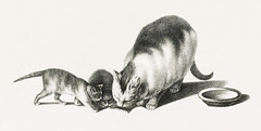 Illustration of domestic cat and kittens by Gottfried Mind (1768-1814). Digitally enhanced from our own original edition. Original from Library of Congress. Digitally enhanced by rawpixel. (Free Public Domain Illustrations by rawpixel) Tags: animals antique art attention brodtmann caring cats copyspace cute domestic drawing etching gottfried gottfriedmind illustrated illustration inspecting interested joseph kittens lithograph looking mammal mind mother name old paying pet playful pussycat saucer sketch three vintage