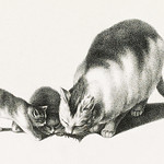 Illustration of domestic cat and kittens by Gottfried Mind (1768-1814). Digitally enhanced from our own original edition. Original from Library of Congress. Digitally enhanced by rawpixel. thumbnail