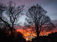 20180323-0006 (www.cjo.info) Tags: edinburgh europe europeanunion londonroad newtown scotland unitedkingdom westerneurope citycenter cloud flora plant sky sunset tree