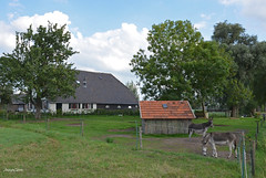 FARMHOUSE DONKEY (JaapCom) Tags: jaapcom farmhouse farmhause animals dutch wezep holland landscape landed ezels deer natural donkey