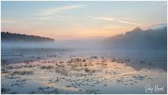 Morning Hike... (RudyMareelPhotography) Tags: belgischlimburg belgium deteut europe flanders gent ghent hasselt limburg zonhoven heather landscape landscapephotography nikon purpleheather vlaanderen be flickrclickx flickr ngc