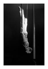 """Le Cirque Français"" (The Blue Water Lily's Company) Tags: fdrouet nb bw monochrome monochrom circus cirque nikon d90"