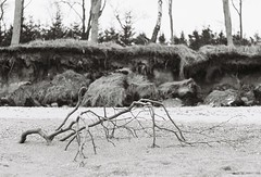# (alex//b) Tags: 2018 analog film 35mm prakticamtl5 ostsee balticsea rostock graalmüritz baum tree wald forest strand beach sand ast limb meer sea