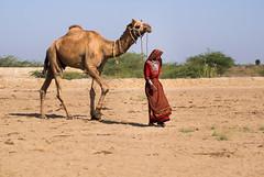 desert girl (Wanda Amos@Old Bar) Tags: gujarat zainabad camel camelherder desert woman animal sky